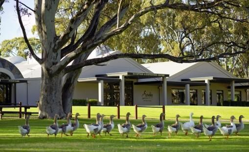 Home to more than a dozen Geese...